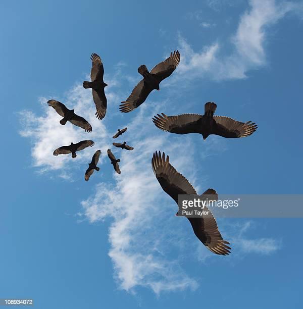 Vultures in Spiral Pattern