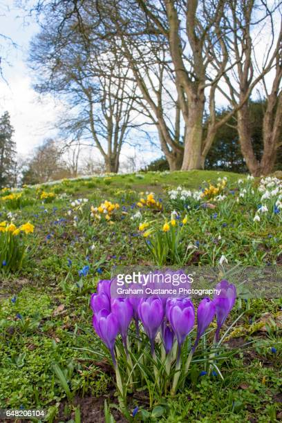 Waddesdon in Spring