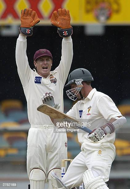 Wade Seccombe of Queensland appeals for the wicket of Gerard Denton of Tasmania during the Pura Cup match between the Queensland Bulls and the...