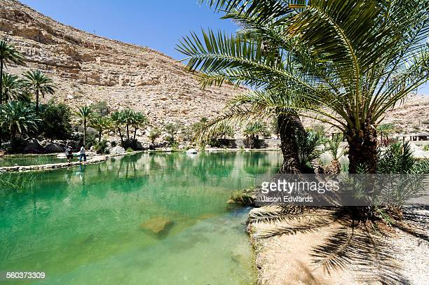 Palm trees grow on the shore by the turquoise waters of a wadi in a desert valley.