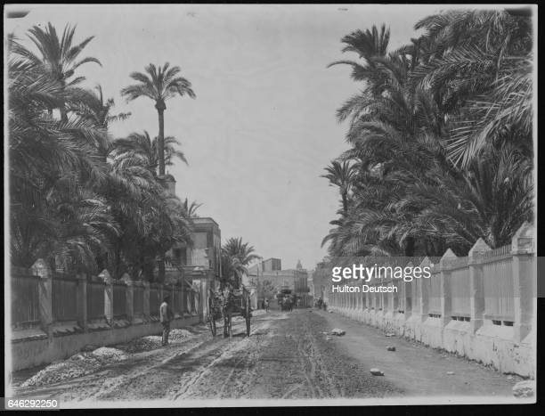 A wagon moves slowly along the Carretera de Alicante flanked with palm forest