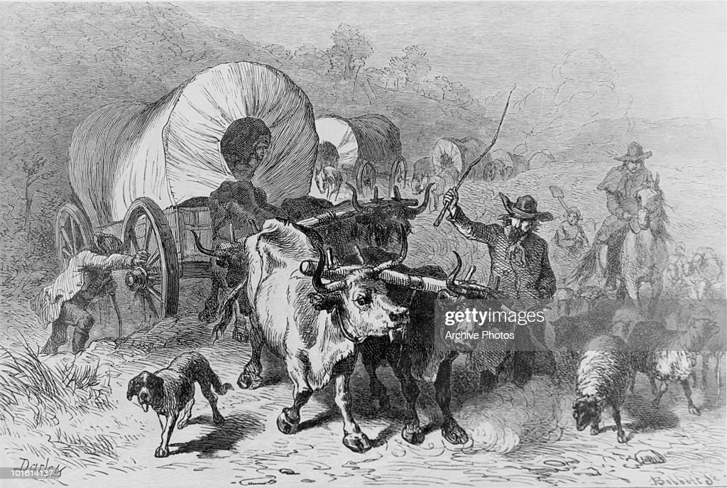 A wagon train drawn by oxen travelling across the plains during the westward expansion of the United States circa 1850 Engraving by FOC Darley