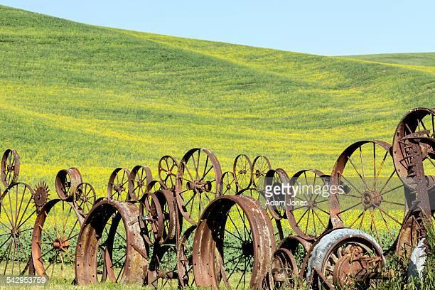 Wagon wheel fence and canola crop