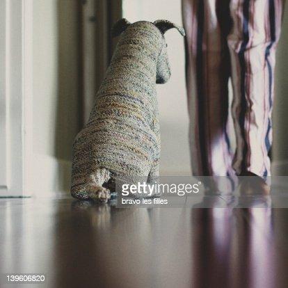 Wait here, socrat dog! : Stock Photo