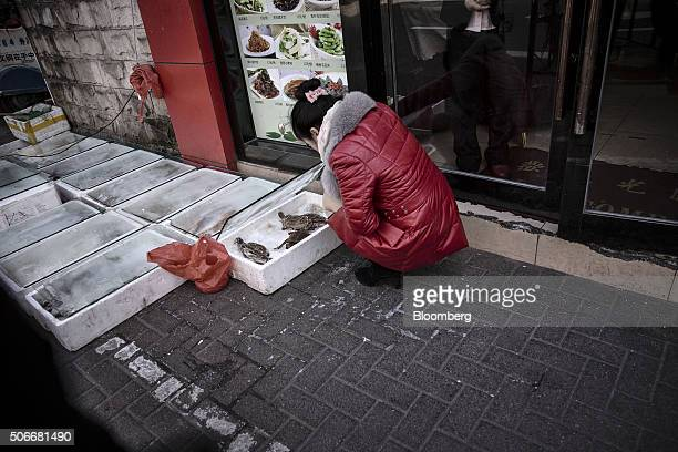 A waitress lifts up the cover of a container storing fresh crabs outside of a restaurant in Shanghai China on Sunday Jan 24 2016 For all the hand...