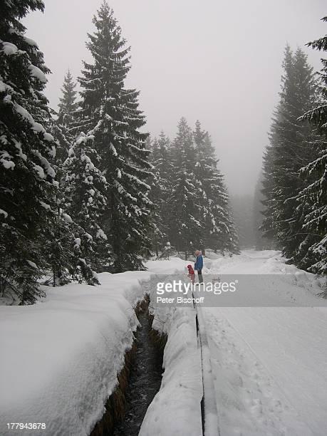 Wald bei Torfhaus / Altenau Oberharz Harz Niedersachsen Deutschland Europa Winter Schnee Bäume Bach Reise