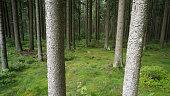 Kulturwald in Mitteleuropa