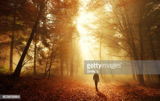 Walk in breathtaking light of the autumn forest : Stock Photo