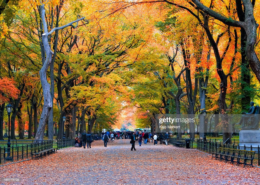 Walk in the Park : Stock Photo