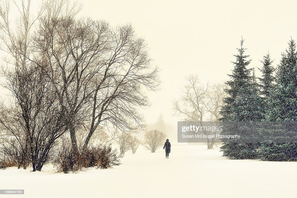 A Walk in the Park : Stock Photo