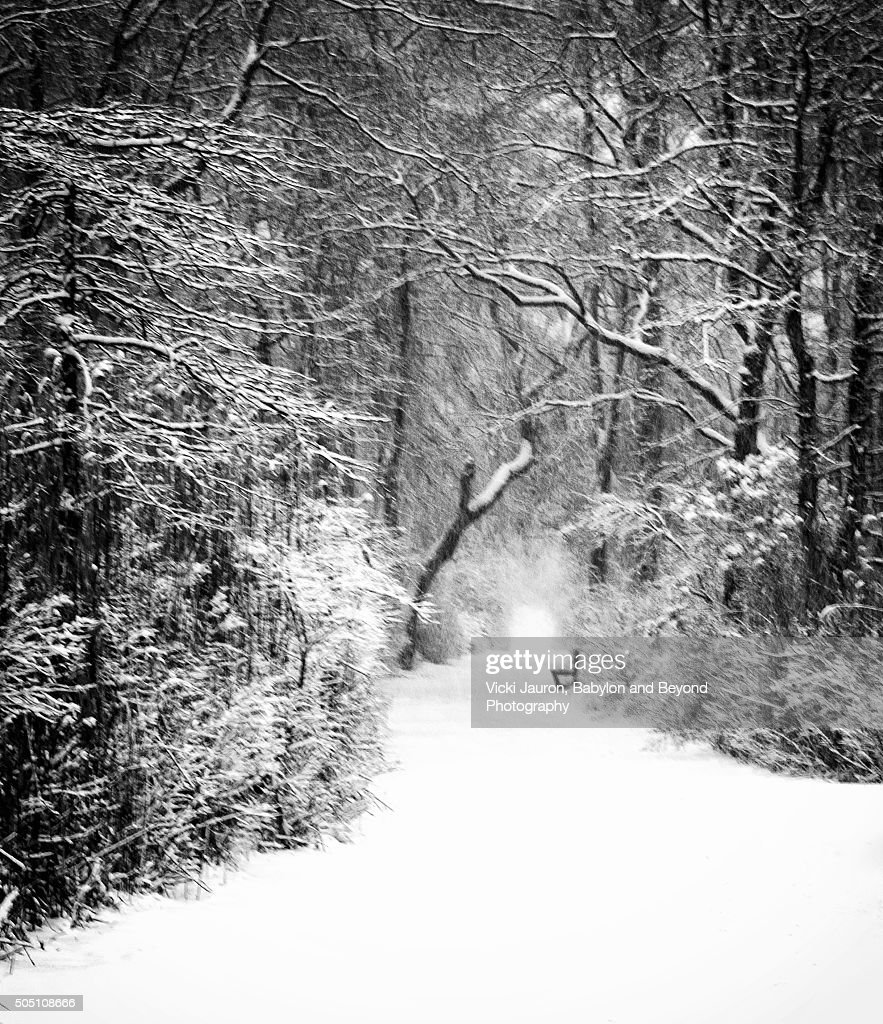 A Walk in the Snowy Winter Woods at Gardiner County Park in Bayshore Long Island