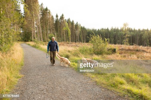 walk in the woods with dogs : Stock Photo