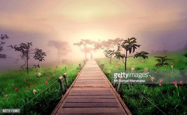 Walk way in Siam Tulip field at sunrise