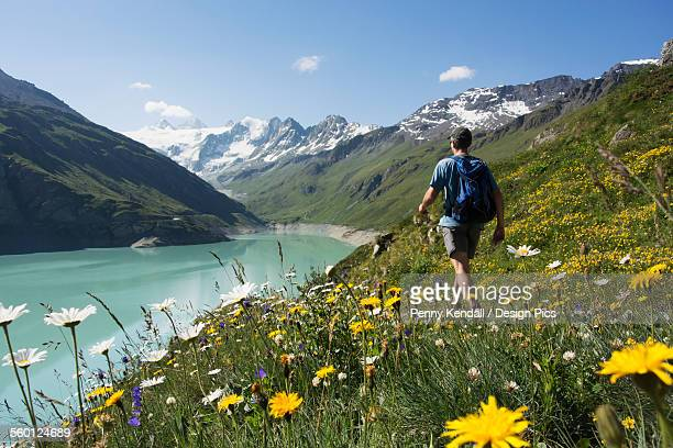 Walker and summer alpine flowers along the banks of the Moiry reservoir with mountains in the background