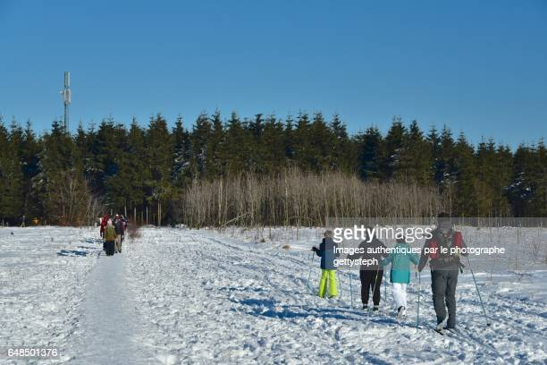 Walkers and cross country skiers to tree area