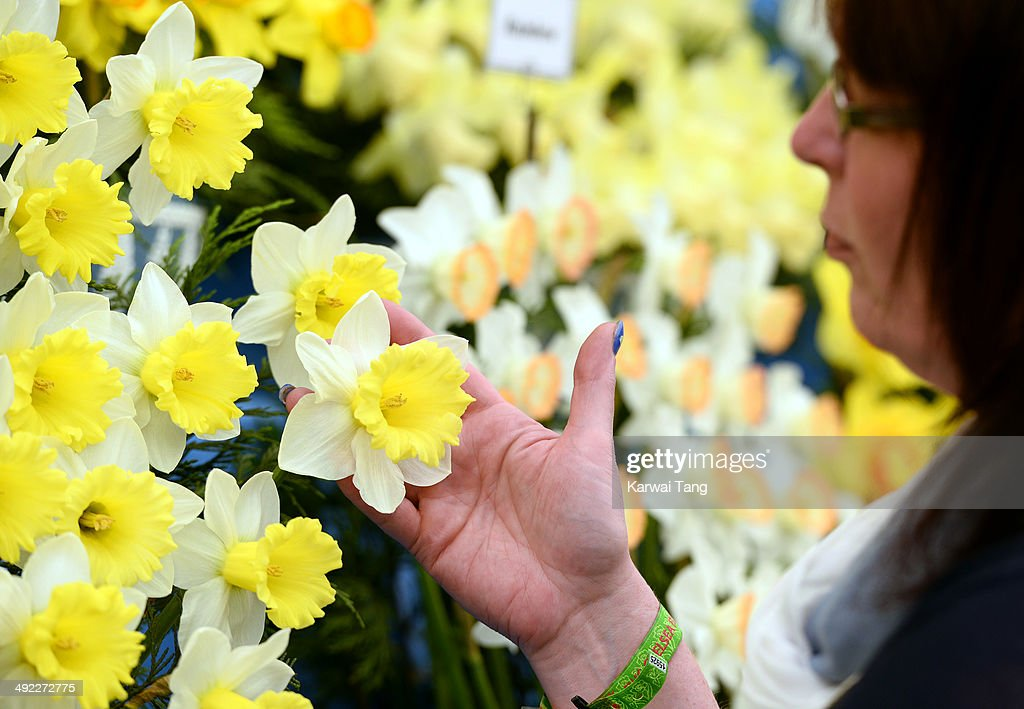 Walkers Bulbs are launching a new variety of Daffodil at the RHS Chelsea Flower Show 2014 named Georgie Boy to commemorate the birth of HRH Prince George of Cambridge, Chelsea Flower Show held at the Royal Hospital Chelsea on May 19, 2014 in London, England.