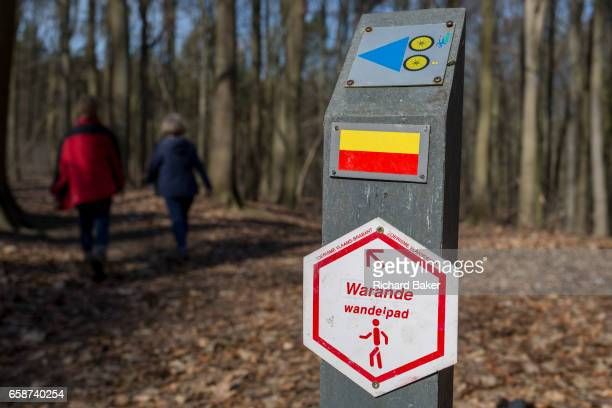 Walkers in woods that form part of the Foret de Soignes on 25th March in Everberg Belgium Forêt de Soignes or Sonian Wood is a 4421hectare forest...