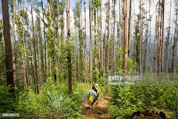 Walkers passing through forest Ella Rock mountain Ella Badulla District Uva Province Sri Lanka Asia