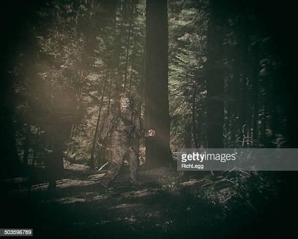 Quelques Bigfoot