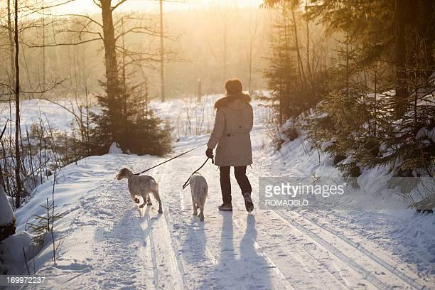 Walking dogs on a snowy winter day in Oslo, Norway