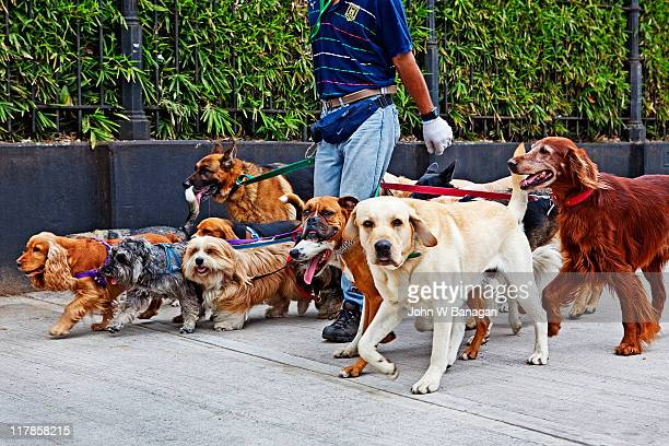 Walking dogs,Recoleta , Buenos Aires, Argentina