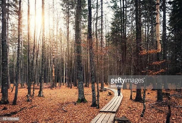 Caminando en el bosque de otoño