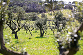 photos taken at the green landscape in the hinterland of the Porquerolles Island walking through the olive groves and the vineyards