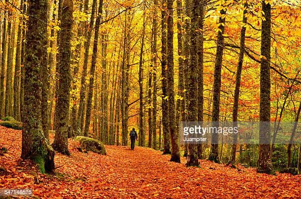 Walking inside the fall