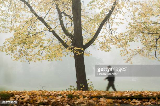 A walking man is pictured in front of a colorful tree in the foggy morning on October 18 2017 in Berlin Germany