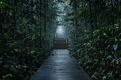 Walking path in the forest