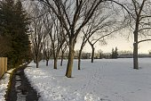 Lonely Path in snowy park and barren aspen tree branches in late Fall near Market Mall in City of Calgary Alberta Canada