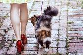 Walking The Cat