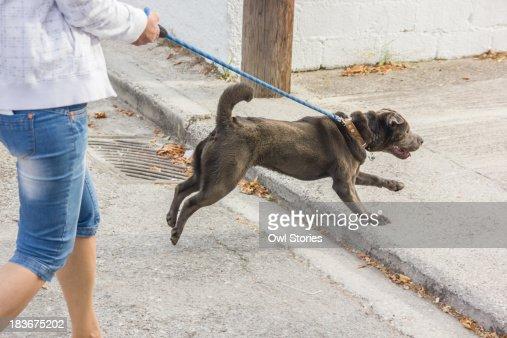 Walking the dog : Stock Photo