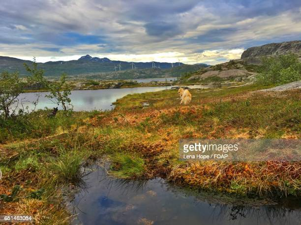 Walking the dogs in the mountains of Narvik