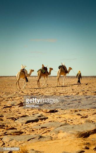 Walking with camels in Libyan Sahara desert