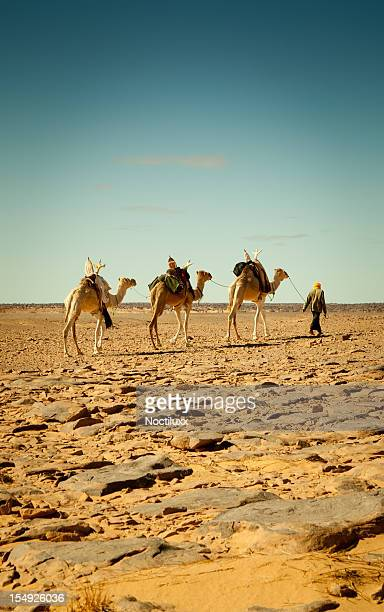 Walking with camels in Libyan Sahara desert