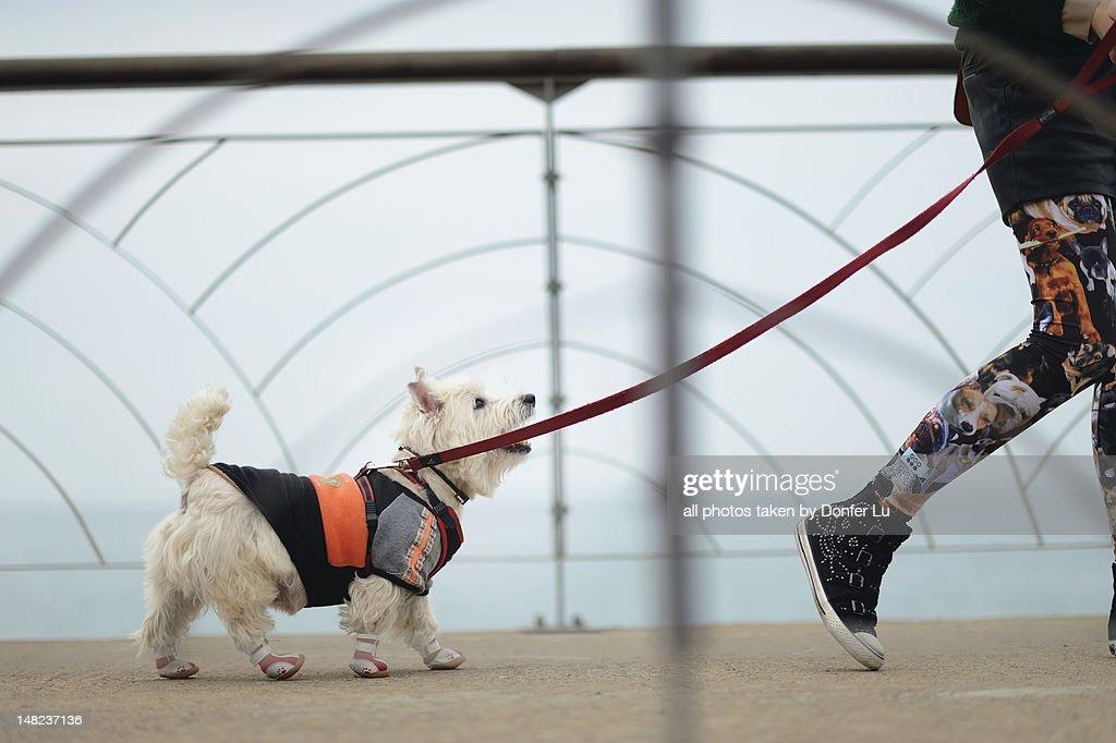 Walking with dog : Stock Photo