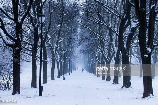Walkpath in snowy park