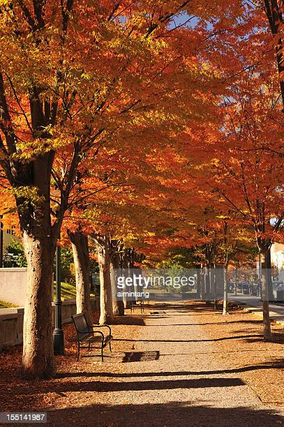 Walkway in Fall Colors