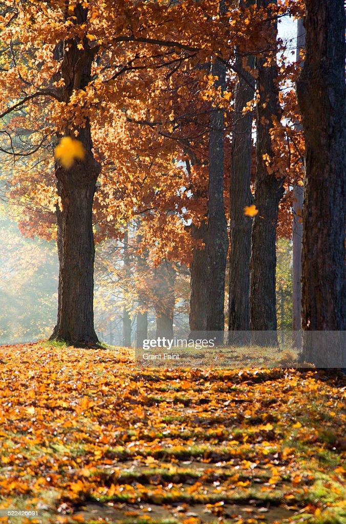 Walkway in fall colours