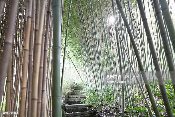 walkway leading through bamboo grove