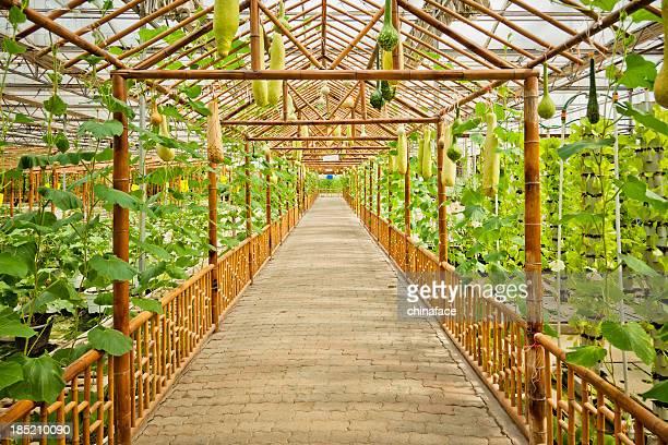walkway of garden