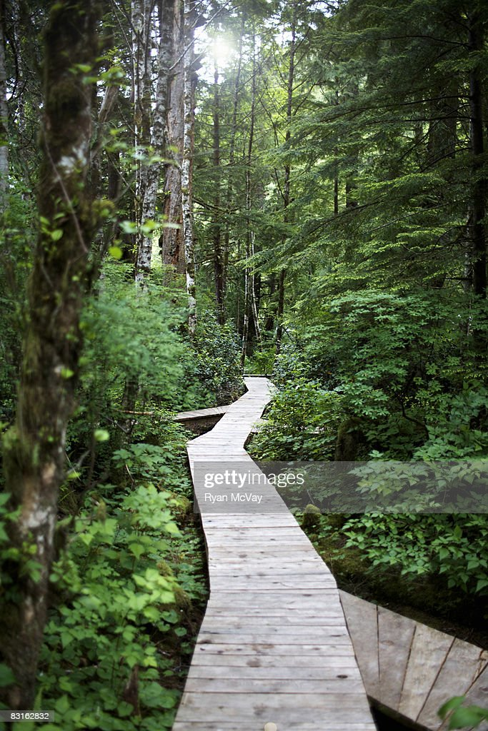 Walkway through forest. : Stock Photo