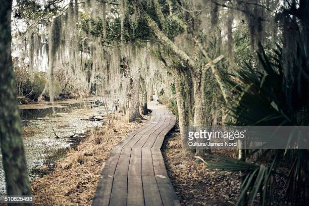 Walkway through swamp, New Orleans, Louisiana, USA