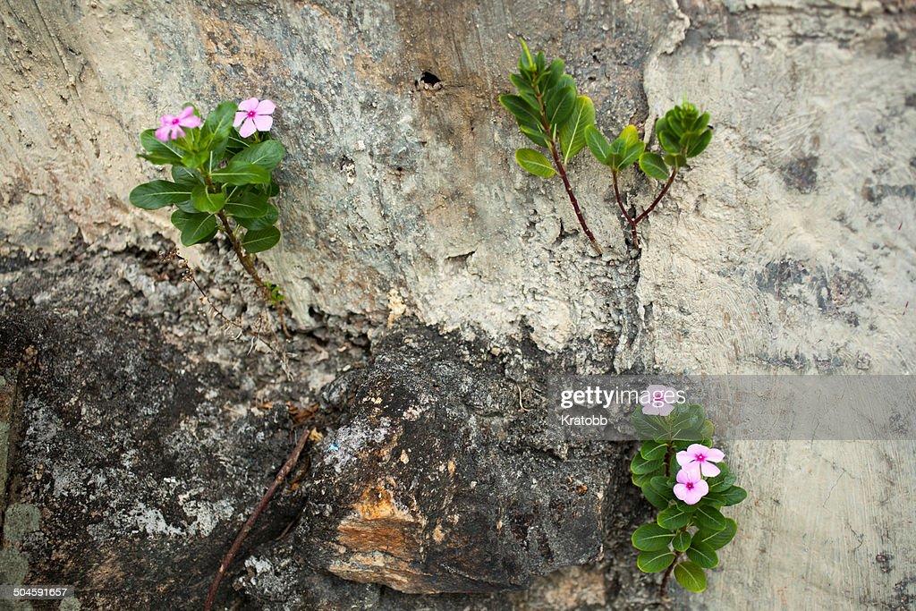 Wall and flowers, Lamma Island, Hon
