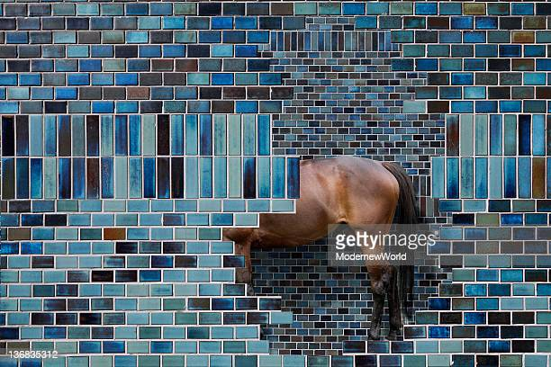 wall and horse