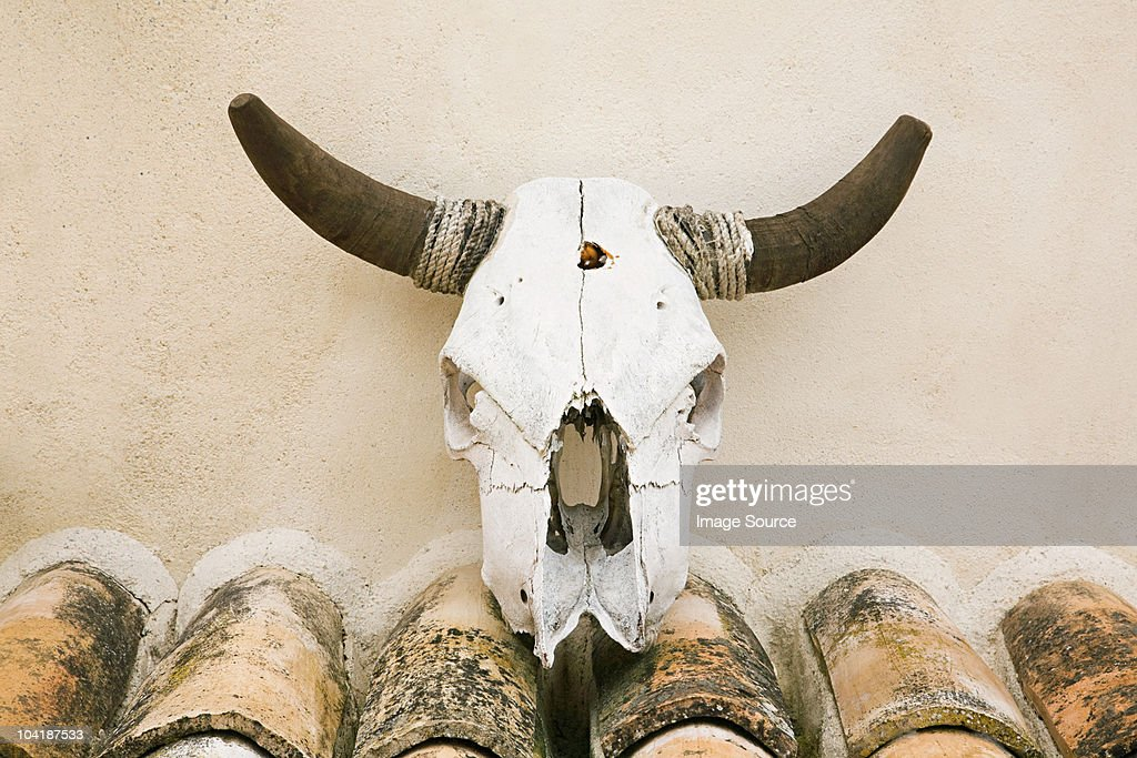 Wall mounted cattle skull, Granada, Spain