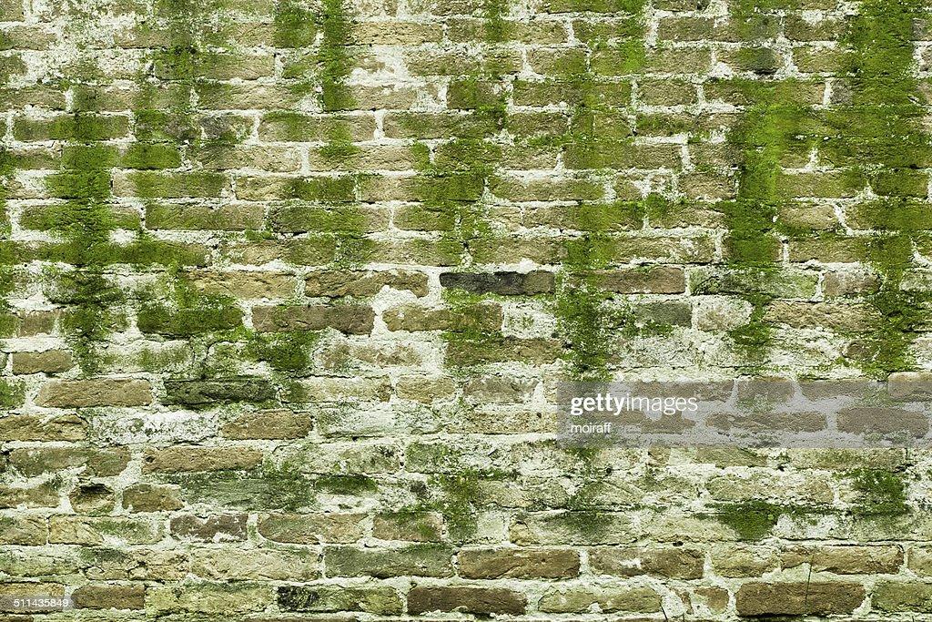 Muro con muschio foto stock thinkstock