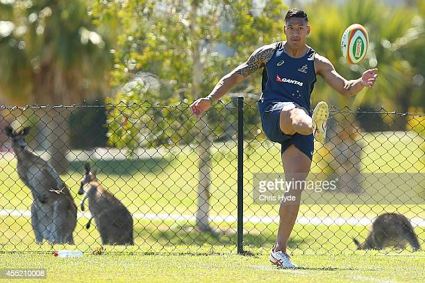 Wallabies are seen while Israel Folau kicks during an Australian Wallabies training session at the Palms Sports Fields on September 11 2014 in Gold...