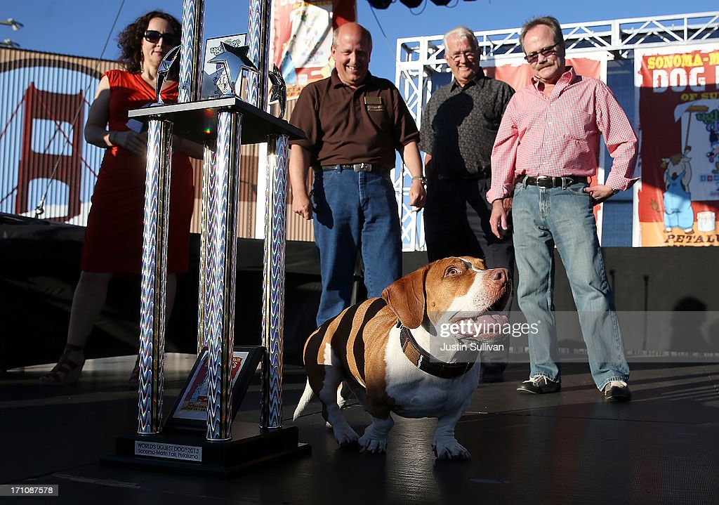 Walle, a basset beagle mix, walks on stage after being crowned the winner of the 25th annual World's Ugliest Dog contest at the Sonoma Marin Fair on June 21, 2013 in Petaluma, California. Walle, a basset and beagle mix won the honor of being the world's ugliest dog.